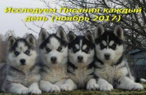 ежедневный стих ноябрь 2017 обл