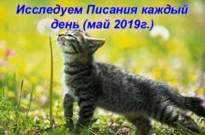 ежедневник для детей май 2019